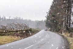 Samochód bezpiecznie ciągły na drodze rozjaśniał od spadać drzewa Spadać drzewo przez drogę po silnego wiatru Droga blokująca obo Fotografia Royalty Free