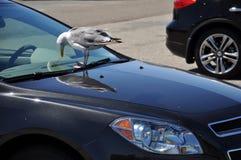 Samochód i ptak Zdjęcie Stock