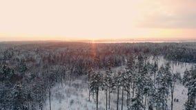 Samochód jedzie drogą w śnieżystym lasowym materiale filmowym Promienie ranku słońce widok z lotu ptaka Widok z lotu ptaka śnieżn zdjęcie wideo