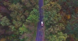 Samochód jedzie wzdłuż drogi w lesie między jesieni drzewami zbiory wideo