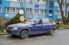 Samochód po wypadku Duży stary drzewo spadał na samochodzie Roztrzaskujący samochód na ulicie po ciężkiego wiatru fotografia stock