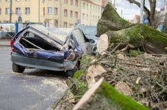 Samochód po wypadku Duży stary drzewo spadał na samochodzie Roztrzaskujący samochód na ulicie zdjęcia stock