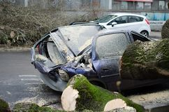Samochód po wypadku Duży stary drzewo spadał na samochodzie Roztrzaskujący samochód na ulicie fotografia stock