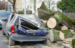 Samochód po wypadku Duży stary drzewo spadał na samochodzie Roztrzaskujący samochód na ulicie obraz stock
