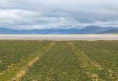 Samochód tropi na trawy polu prowadzi biała plaża Obrazy Stock
