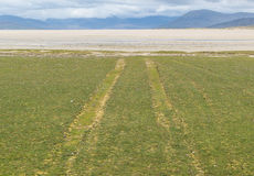 Samochód tropi na trawy polu prowadzi biała plaża Zdjęcia Royalty Free