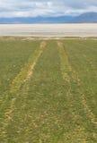 Samochód tropi na trawy polu prowadzi biała plaża Zdjęcie Royalty Free