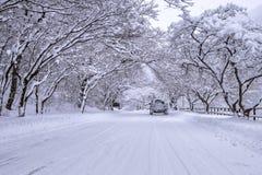 Samochodowy i spada śnieg w zimie na lasowej drodze z śniegiem dużo Zdjęcie Stock