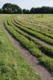 Samochodu ślad na polu z trawą fotografia royalty free