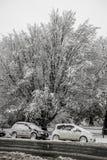 Samochody i drzewa zakrywający w śniegu Fotografia Royalty Free