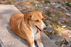 Samodzielny zwierzę pies zdjęcia stock