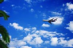 samolotowa palma Fotografia Royalty Free