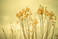 Samorzutna roślinność Fotografia Royalty Free