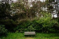 Samotna ławka w stanu parku Minnestoa Zdjęcie Royalty Free