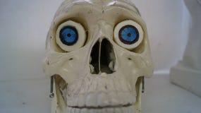 Samotna czaszka Zdjęcie Royalty Free