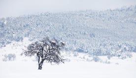 samotna drzewna zima Fotografia Royalty Free