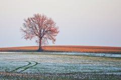 samotna drzewna zima Obraz Royalty Free