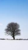 samotna drzewna zimy. zdjęcia stock