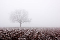samotna drzewna zimy. Zdjęcie Royalty Free
