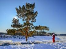 samotna drzewna zimy zdjęcie royalty free