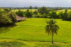 Samotna kokosowego drzewa wieś Zdjęcie Royalty Free