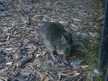 Samotna mysz thingy obrazy royalty free