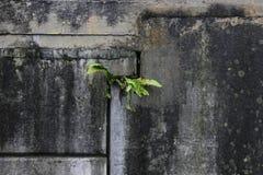 Samotna natura zdjęcie stock