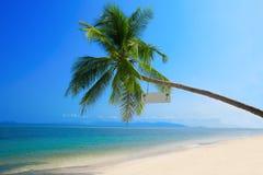 Samotna palma na tropikalnym wybrzeżu Zdjęcia Royalty Free