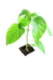 Samotna roślina zdjęcie royalty free