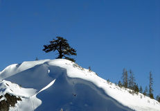 samotne drzewo Zdjęcie Stock