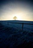 samotne drzewo Fotografia Stock
