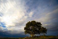samotne drzewo Zdjęcia Stock