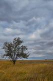 samotne drzewo Obraz Stock