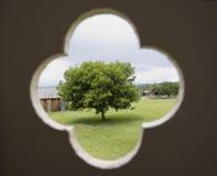 samotne drzewo obraz royalty free