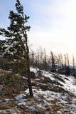 samotne drzewo Obrazy Stock