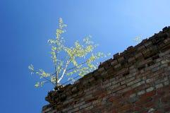 Samotne drzewo przerwy Zdjęcia Royalty Free