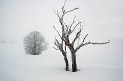 samotne drzewo zimno Fotografia Royalty Free