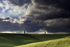 2 samotnego cibory drzewa w polach wokoło San Quirico w Val D'Orcia w Tuscany z burzowym niebem fotografia royalty free