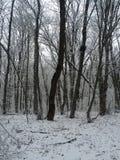 samotnej zimy śnieżny las Zdjęcie Stock