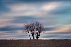 Samotni drzewa na polu i długich ujawnienie chmurach Zdjęcie Stock