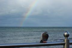 Samotnie marznąca gołąbka na dennym poręczu zdjęcia royalty free