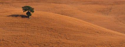 Samotnika drzewo panoramiczny Zdjęcia Stock