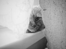 Samotność na okno Zdjęcie Stock