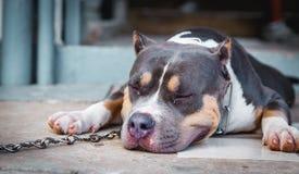 samotność przybłąkany pies Obrazy Royalty Free