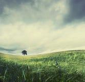 samotności drzewo zdjęcie royalty free