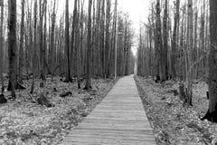 Samotności pojęcie popielaty jesień park schodki schodek obrazy stock