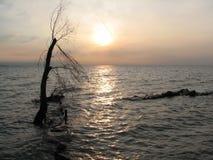 samotności zalewający drzewo Zdjęcia Stock