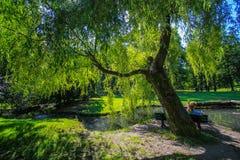 Samotności obsiadania miejsce w parku Zdjęcie Stock