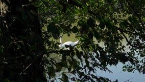 Samotny łabędź na jeziorze zdjęcie wideo