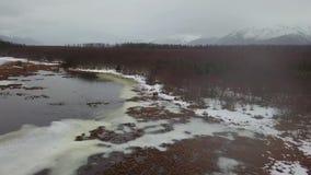 Samotny łosia amerykańskiego karmienie w bagnach Alaska zdjęcie wideo
